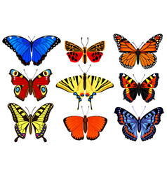 cartoon butterflies flying colorful insects vector image