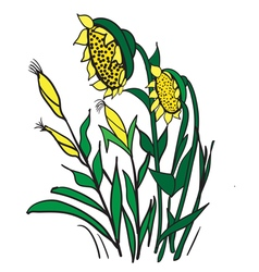 Corn and sunflowers vector image