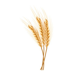 Eco wheat icon realistic style vector