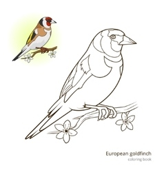 European goldfinch color book vector