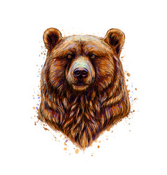 Portrait a brown bear head from a splash of vector