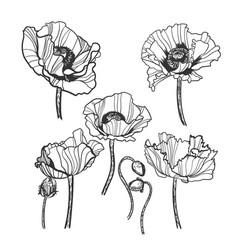 sketch design elements plant set vector image