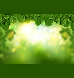 tree leaves border on green fresh bokeh background vector image