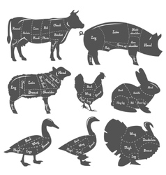 Vintage diagram meal cutting vector image