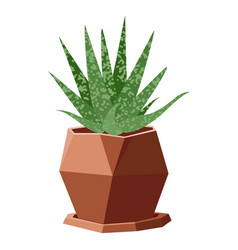 With succulent in geometric vector