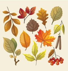 Set of colorful isolated autumn leaves vector image