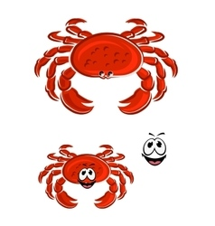 Red crab animal cartoon character vector image