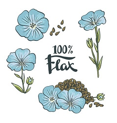 Flax Seeds and flowers vector image
