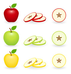 Apple slice set isolated vector