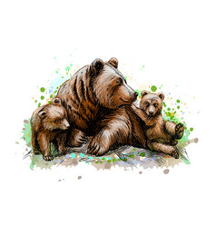 brown mother bear with her cubs from a splash of vector image