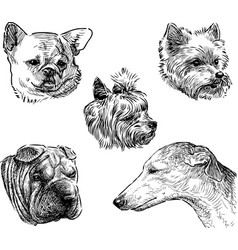 sketches dogs heads vector image