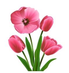 Tulip flower pink vector