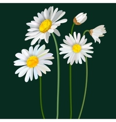 Chamomile flower mint leaves composition isolated vector image vector image