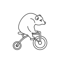 Circus bear on a bicycle icon outline style vector