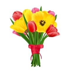 Tulip flower bouquet vector image vector image