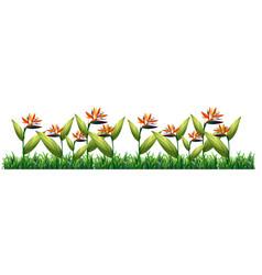 Bird of paradise flower template vector
