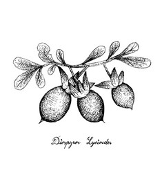 Hand drawn of diospyros lycioides on white backgro vector