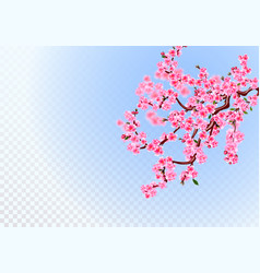 Sakura lush branches with light purple flowers vector