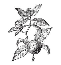 vintage engraving of vector image