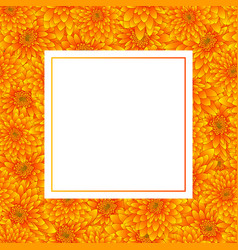 yellow chrysanthemum banner card vector image