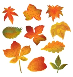 Autumn leaves set on the white background vector image vector image