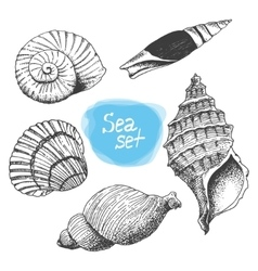 Sea collection of shells Original hand drawn vector image vector image