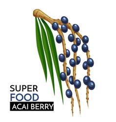 Acai berry icon vector