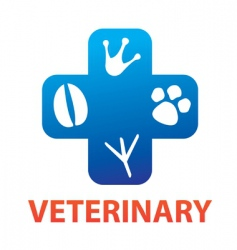 veterinary vector image vector image