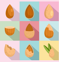 almond walnut oil seed icons set flat style vector image