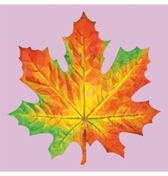 Autumn maple leaf vector