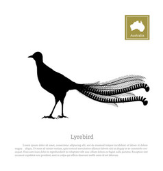 black silhouette of lyrebird animals of australia vector image vector image