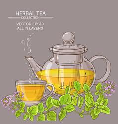 Cup of oregano tea in teapot vector