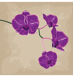 Floral pattern with orchids hand-drawing vector image