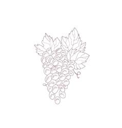 Grape Vine Hand Drawn Realistic Sketch vector