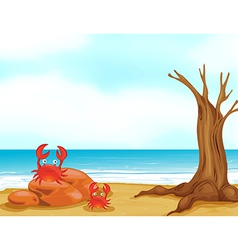 Seaside Crab vector image