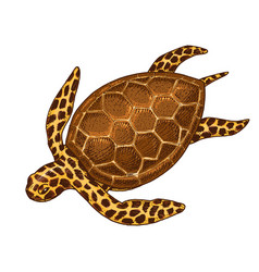 sea creature cheloniidae or green turtle engraved vector image