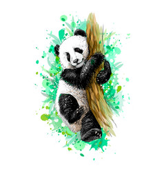 Panda bacub sitting on a tree from a splash of vector