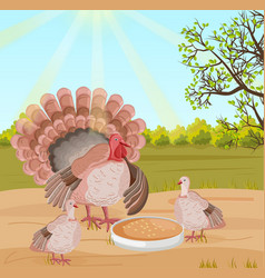 Turkey at the farm nature background vector