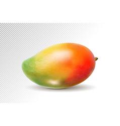 3d realistic orange red green mango on transparent vector image