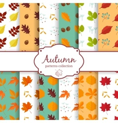 Autumn seamles backgrounds set vector image