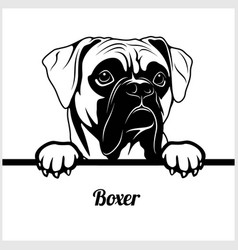 Boxer - peeking dogs - - breed face head isolated vector