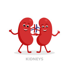 strong healthy kidneys cartoon characters isolated vector image