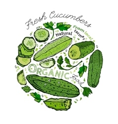 Hand Drawn Cucumber 02 A vector image vector image