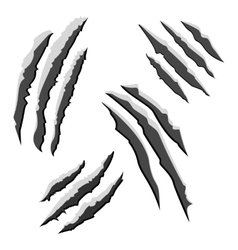 Set of black claw scratches isolated on white vector image vector image