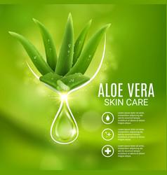 Aloe vera extract skin care poster vector