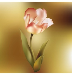 Flower tulips flower spring petal tulip isolated vector