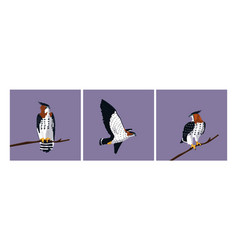 Imposing hawks birds with different poses vector