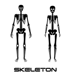 Male and female skeleton - silhouettes vector image