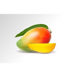Photo-realistic mango vector