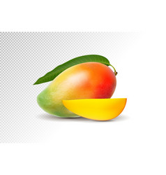 photo-realistic mango with vector image